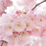 扇・桜・鶴などがモチーフ♪一般の人たちが作った五輪エンブレムの代案が素敵過ぎるのでまとめて紹介